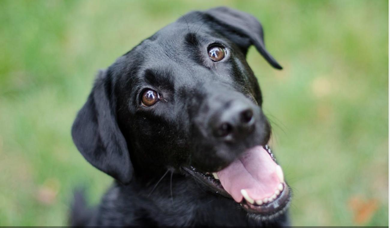 perros_10