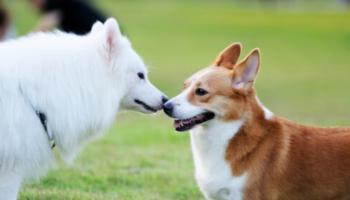 perros_amigos