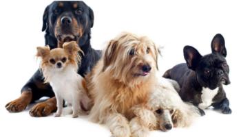 perros_razas