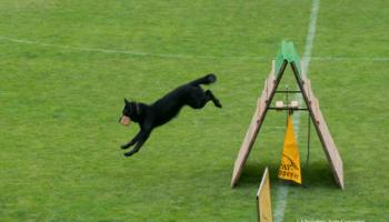 perro_deportivo