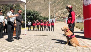 perro bombero 1
