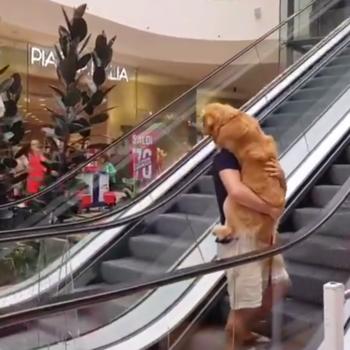 perro_escaleras