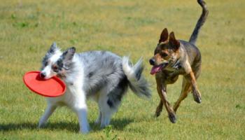 perros_juegos
