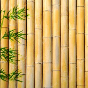 bamboo_china