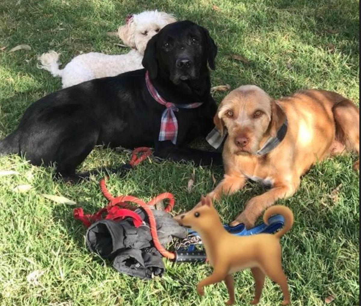 perros_yano
