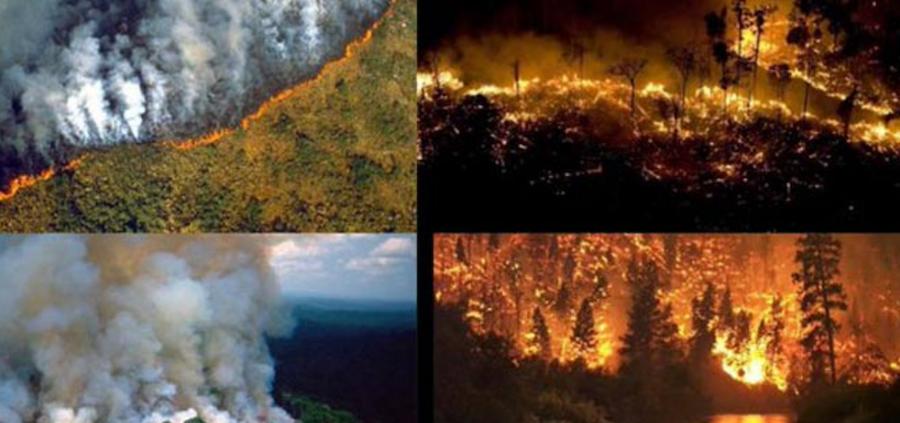 Resultado de imagen para Incendios en la Amazonia: Socialismo o barbarie